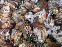 Ny och levande abalone som säljs i den havs- marknaden Arkivfoton