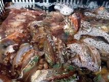 Ny och levande abalone som säljs i den havs- marknaden Arkivbilder