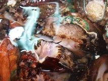 Ny och levande abalone som säljs i den havs- marknaden Royaltyfri Foto