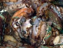 Ny och levande abalone som säljs i den havs- marknaden Royaltyfria Foton