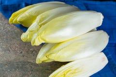 Ny och sund sallad för cikoria (witloof) på en platta Diet- mig Royaltyfria Bilder