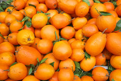 ny orange royaltyfri foto