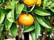 ny orange Royaltyfria Foton