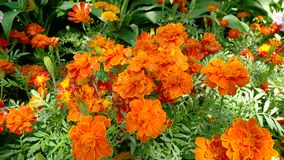 Ny orange bakgrund för blommafält Fotografering för Bildbyråer