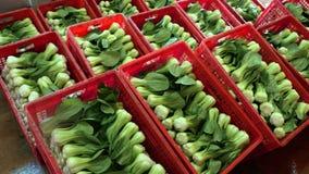 Ny organisk bok som är choy i röd ask Royaltyfria Bilder