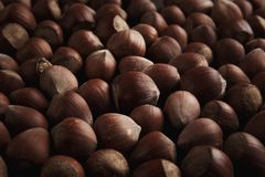 Ny organisk filbertsnöt Hasselnötter bakgrund och textur arkivfoto