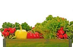 Ny organisk grönsak Arkivfoto