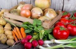 Ny organisk grönsak på den wood tabellen Fotografering för Bildbyråer