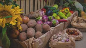 Ny organisk grönsakblandning på marknad royaltyfri bild