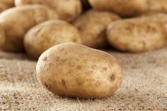 Ny organisk hel potatis arkivfoto