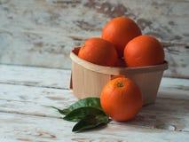 Ny organisk Orange Apelsiner grupperar nytt valt i en korg Royaltyfria Bilder
