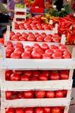 Ny organisk tomat i spjällådor på bondemarknaden som är klar till försäljningen Royaltyfri Fotografi