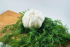 Ny organisk vitlök och dill Royaltyfri Foto