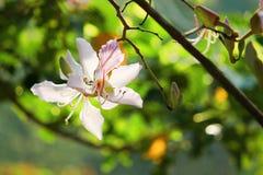 Ny orkidé i morgonen Fotografering för Bildbyråer