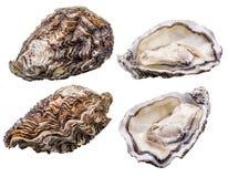 Ny ostron som isoleras med skugga på vit bakgrund Snabb bana arkivfoto