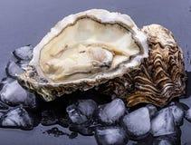 Ny ostron som isoleras med skugga Snabb bana arkivfoto
