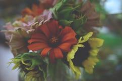 Ny packe av blommor, från organisk hemträdgård Krysantemum och solrosor i vas Härlig hem- blommaträdgård i Puerto R royaltyfri fotografi