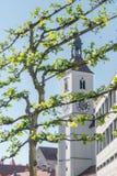 Ny parischkyrka i bakgrunden av ett träd i Regensburg Royaltyfri Foto
