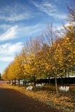 ny park york för färgfall Arkivbild