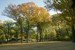 ny parku centralnego Zdjęcie Royalty Free