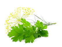 ny parsley Arkivfoton