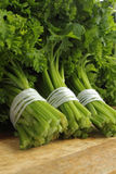 Ny parsley Royaltyfri Bild