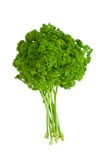 ny parsley Royaltyfria Foton