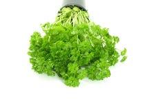 ny parsley Royaltyfri Bild