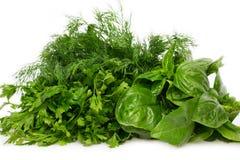 ny parsley för basilikadill Royaltyfri Bild