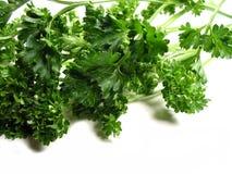 ny parsleywhite för 2 bakgrund Arkivfoto