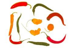 ny peppar Fotografering för Bildbyråer