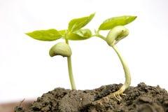 ny planta Arkivfoto