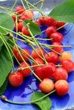 ny platta för Cherry Royaltyfria Bilder