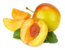 Ny plommonfrukt på vit bakgrund Royaltyfria Bilder