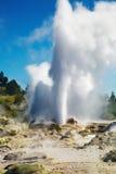 ny pohutu zealand för geyser royaltyfri bild