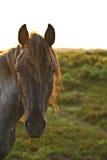ny ponny för beauttiful tät skog upp Royaltyfri Foto