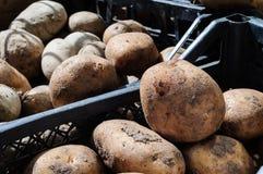 Ny potatis på grönsakshandlare royaltyfri foto