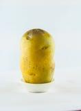 Ny potatis som isoleras på vitbakgrundsslut upp Royaltyfri Bild