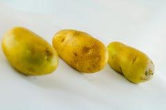 Ny potatis som isoleras på vitbakgrundsslut upp Royaltyfri Foto