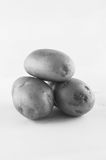 Ny potatis som isoleras på vitbakgrundsslut upp Arkivbild