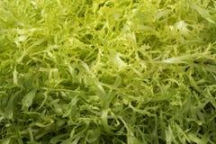 Ny rå friseegrönsallat royaltyfri foto