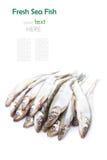 Ny rå havsfisk på vit bakgrund Arkivfoto