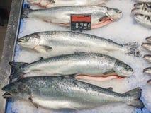 Ny rå laxfisk som är till salu på den lokala marknaden i Ibiza, Spanien Royaltyfri Fotografi
