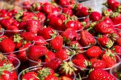 Ny röd jordgubbe i den plast- asken som är klar för försäljning i fruktmarknaden fotografering för bildbyråer