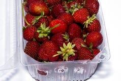 Ny röd jordgubbe i den plast- behållaren Royaltyfria Foton