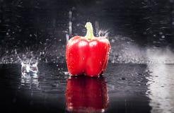 Ny röd paprika över bevattna Royaltyfria Foton