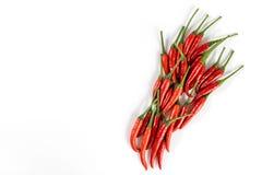 Ny röd peppar Fotografering för Bildbyråer