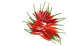 Ny röd peppar Arkivfoto