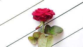 Ny röd rosa blomma på den vita trätabellen