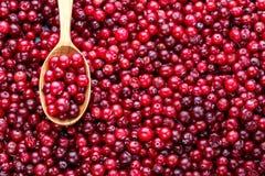 Ny röd skogtranbär H?stsk?rd av l?sa b?r arkivfoto
